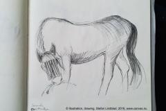 Stefan-Lindblad-hastar-horses-teckningSkissblocket-2016